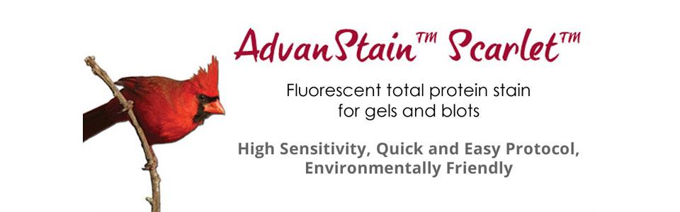 AdvanStain Scarlet protein stain