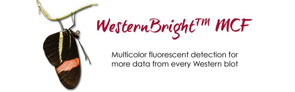 WesternBright MCF