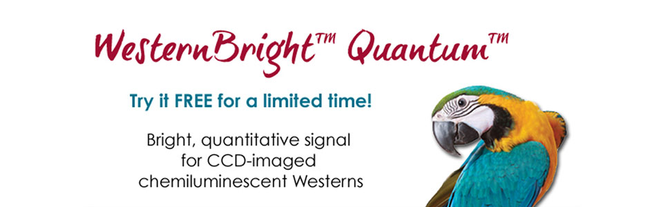 WesternBright Quantum HRP substrate